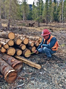 Honorable Mention - Measuring White Spruce Logs